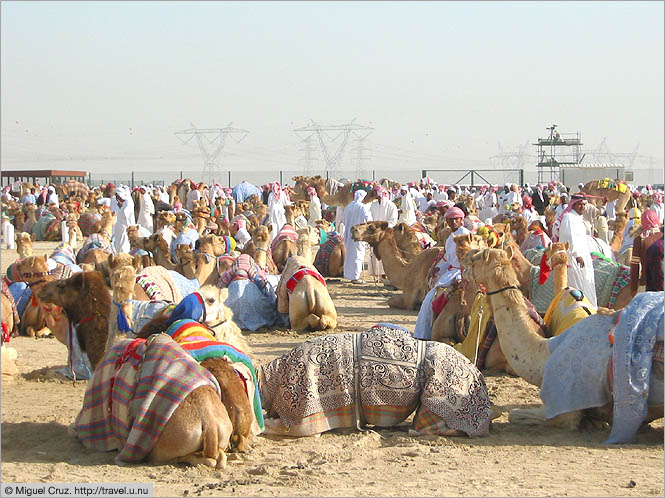 United Arab Emirates: Dubai: Enough camels?