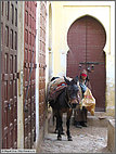 Donkey and door