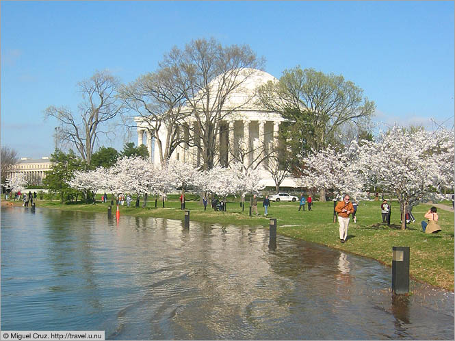United States: Washington DC: Cherry blossom soup